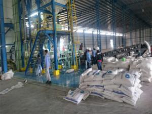 produksi-gula-glenmore-4